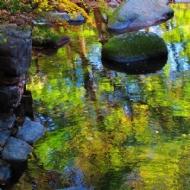 斑斓秋水2